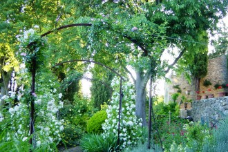 rosiers lianes en juin